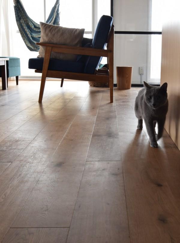 大口の家の猫様