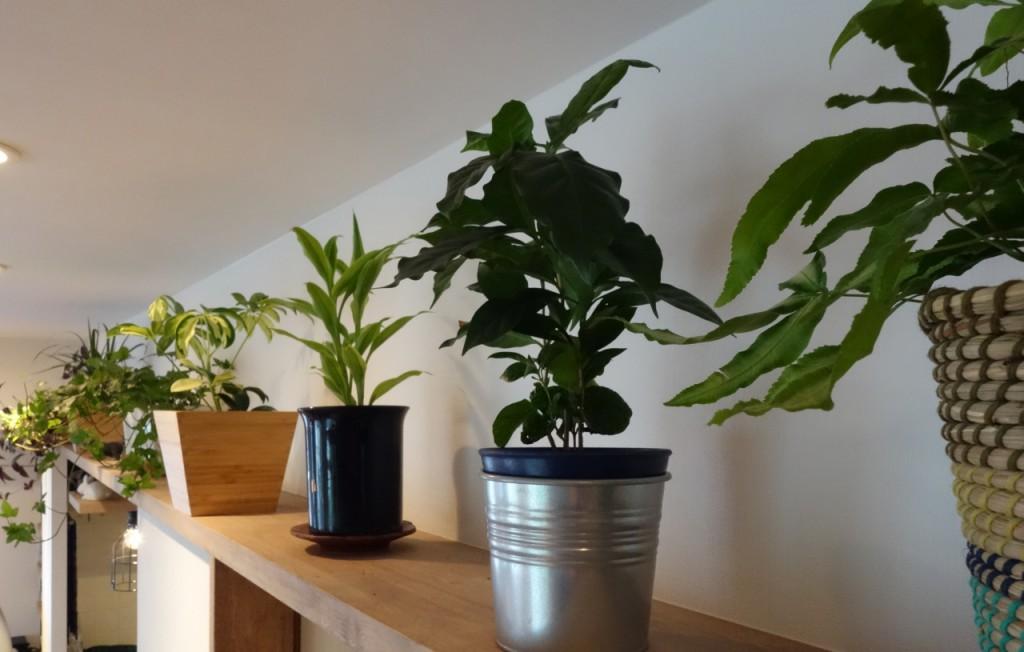 飾り棚の植物