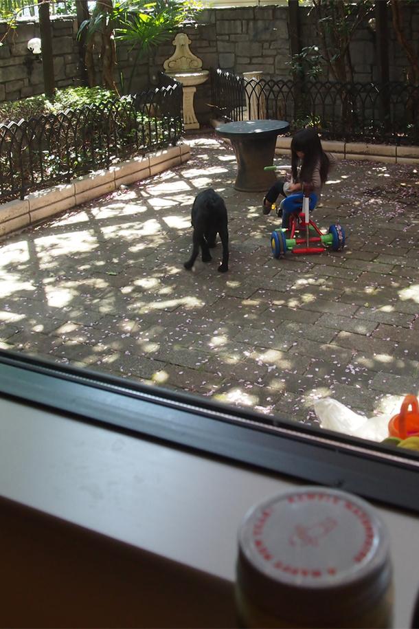 キッチンから庭を見る